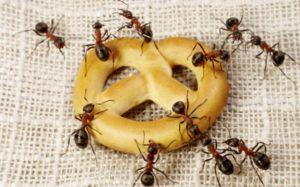 šta znači sanjati mrave mrava bebu rodu vodu