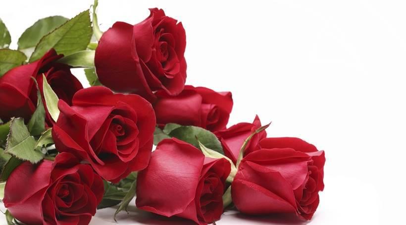 šta znači sanjati ruže cvijeće krv vodu mrave