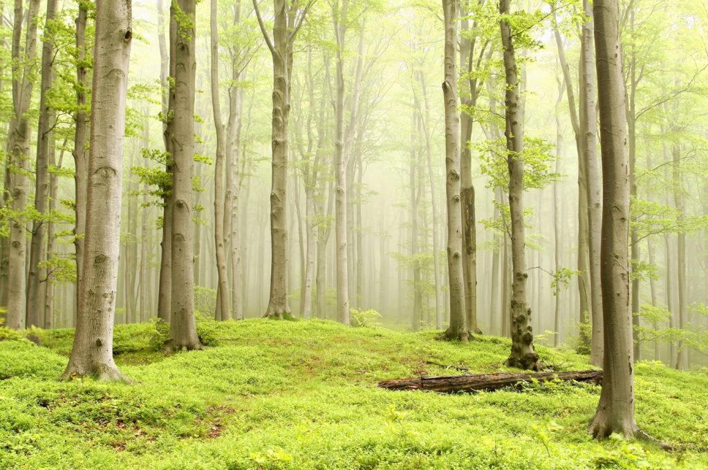 šta znači sanjati šumu šume sume