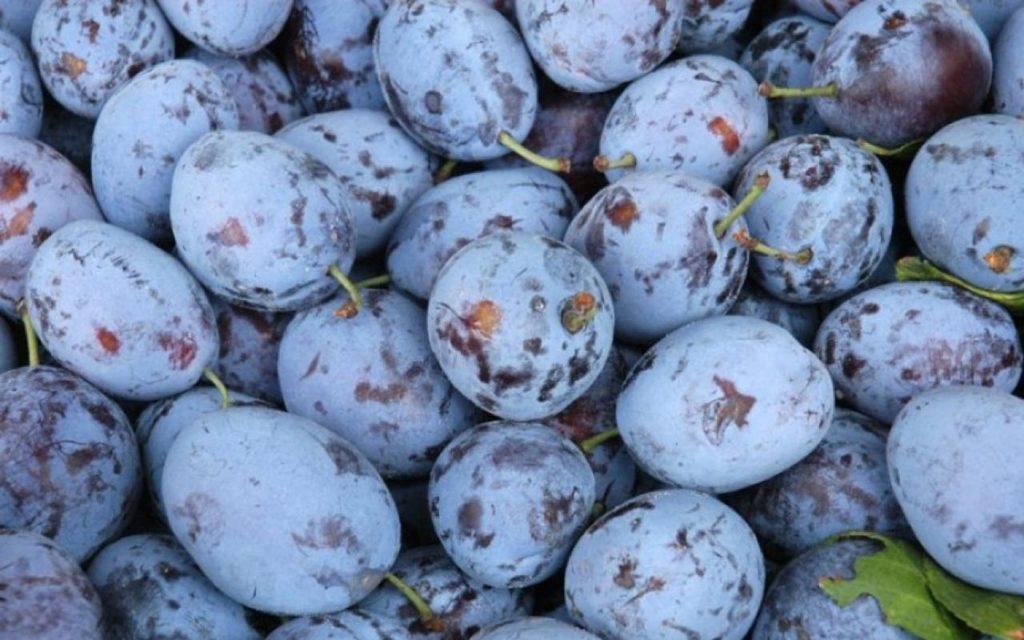 sanjati šljive voće