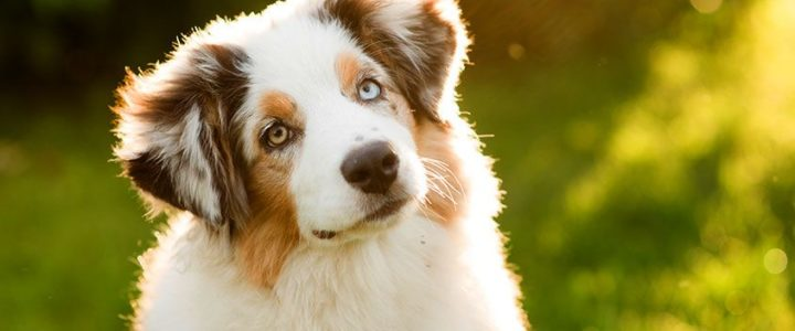 šta znači sanjati psa tumacenje glad krv letenje