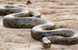 šta znači sanjati zmiju veliku malu mrtvu