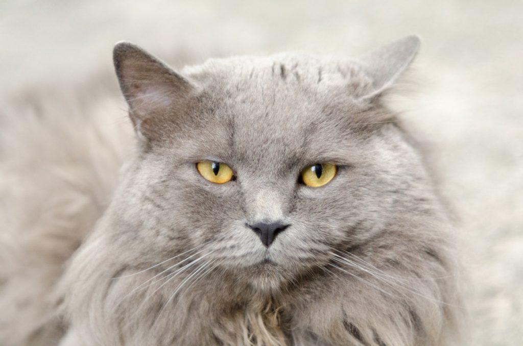 šta znači sanjati mačku mače mačiće crnu belu mrtvu