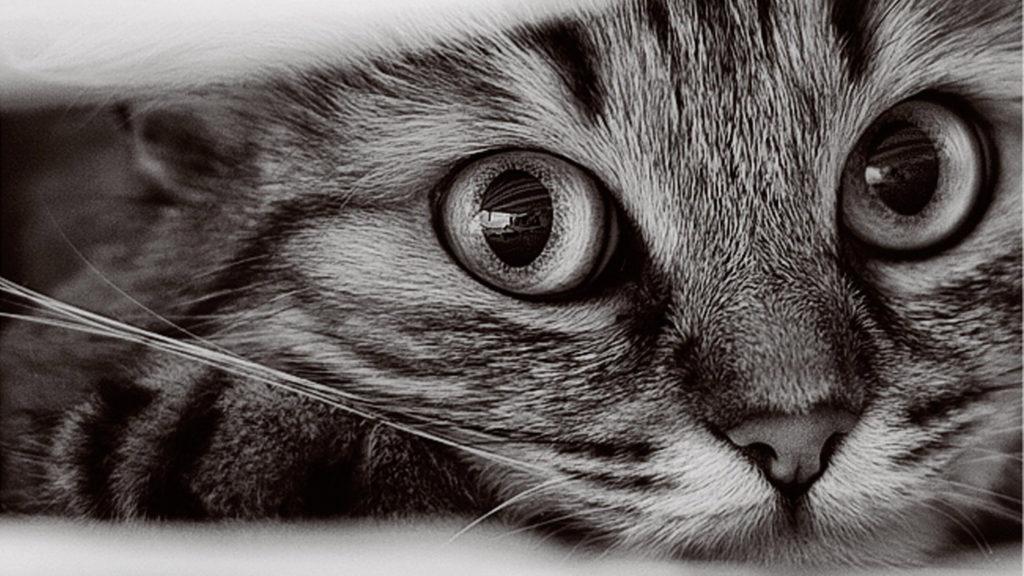 sanjati mačku tumačenje snova šta znači sanjati