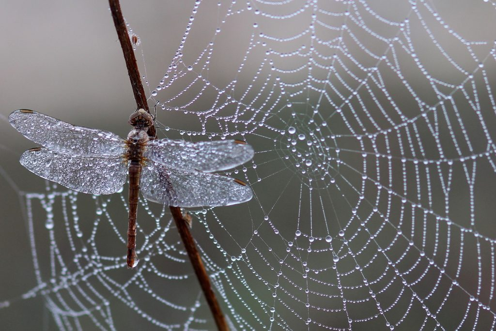 šta znači sanjati pauka pauk