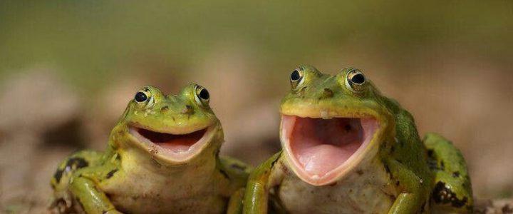 sta znači sanjati žabe žabu