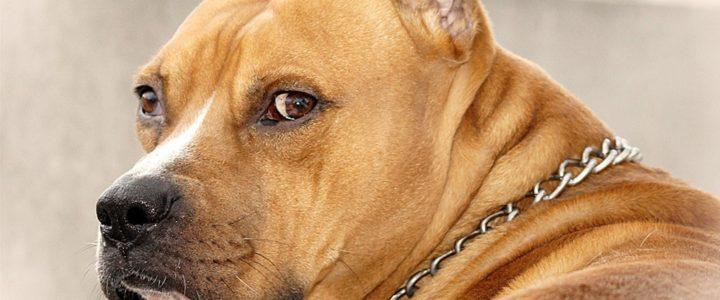 šta znači sanjati psa krv bebu vodu