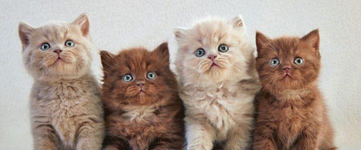 Mačiće