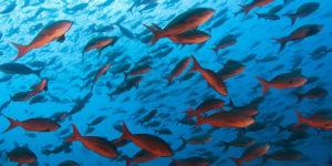 sta ynaci sanjati ribe ribu riba