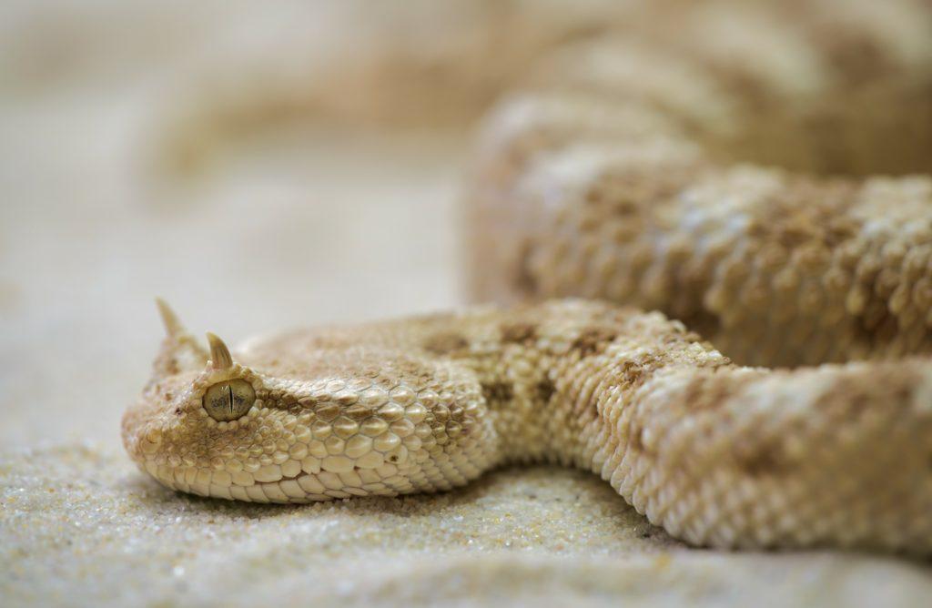 šta znači sanjati zmiju crnu belu
