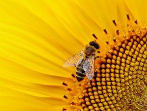 Šta znači sanjati pčele sanovnik