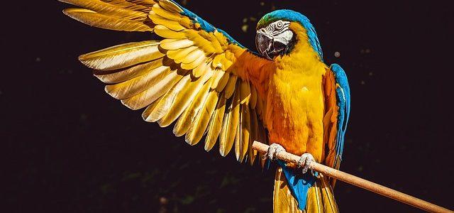 Šta znači sanjati papagaja
