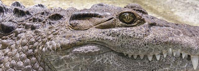 Šta znači sanjati aligatora sanovnik