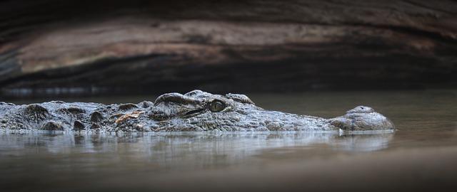 Šta znači sanjati aligatora