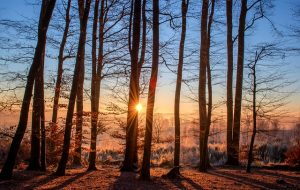 Šta znači sanjati drva