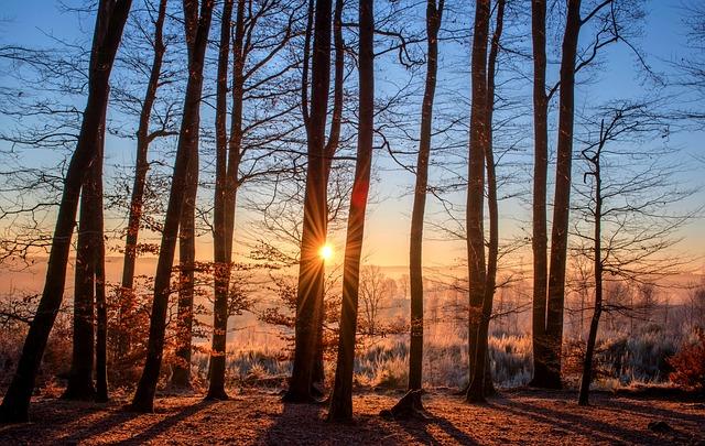 Šta znači sanjati drva sanovnik
