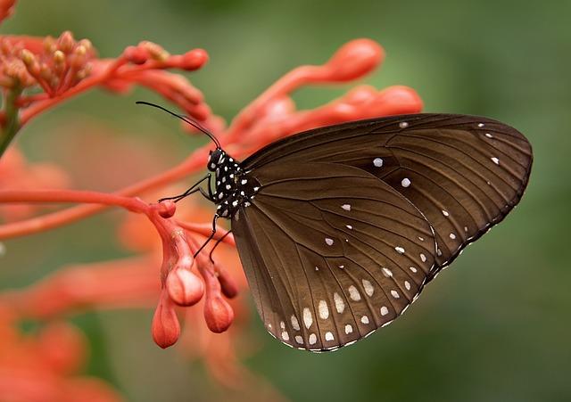 Šta znači sanjati leptira