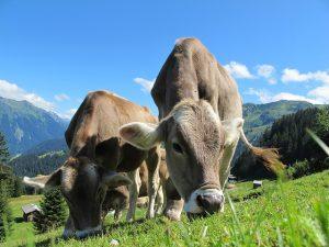sanjati stoku snovi