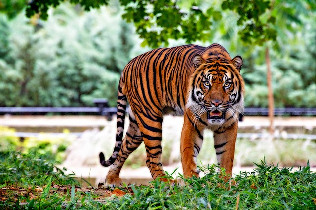 sanjati tigra snovi