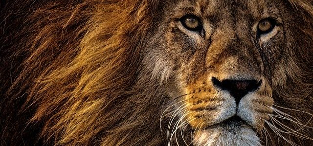 sanjati lava značenje sna