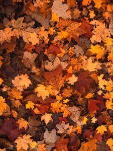 sanjati lišće značenje sna